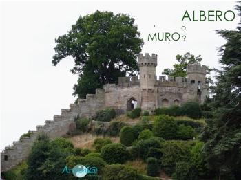 albero_muro_armonyapeb